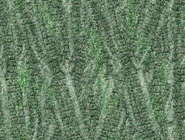 Erba prato grass lawn 176
