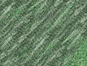 Erba prato grass lawn 177