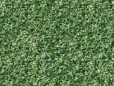Erba prato grass lawn 178
