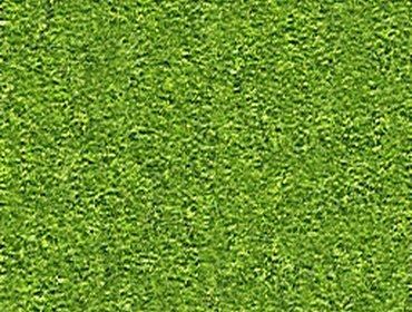 Erba prato grass lawn 19