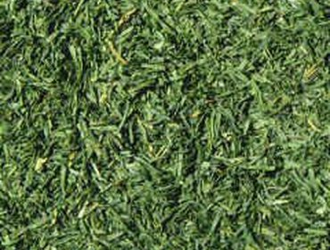 Erba prato grass lawn 190