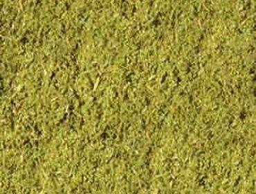 Erba prato grass lawn 192