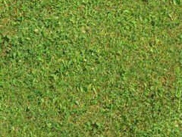 Erba prato grass lawn 194