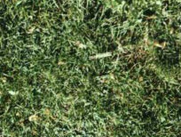 Erba prato grass lawn 200