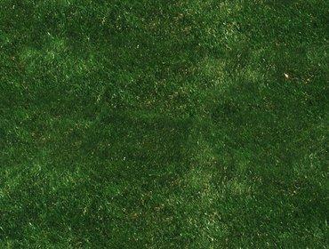 Erba prato grass lawn 201
