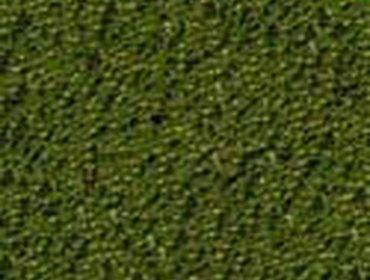 Erba prato grass lawn 202