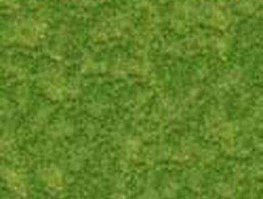 Erba prato grass lawn 203