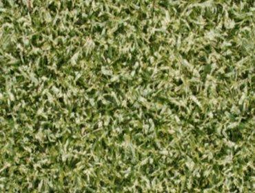 Erba prato grass lawn 204