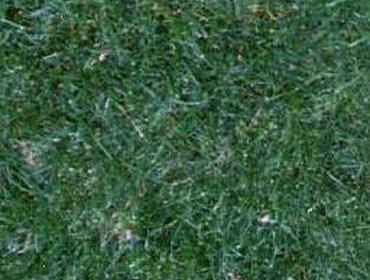 Erba prato grass lawn 208