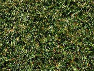 Erba prato grass lawn 209