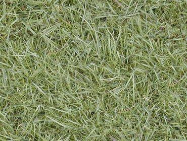Erba prato grass lawn 21
