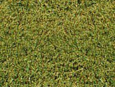 Erba prato grass lawn 210