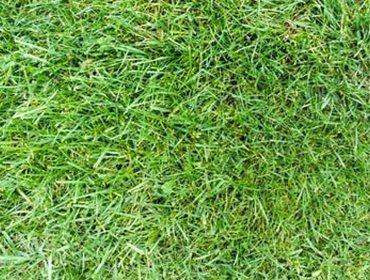 Erba prato grass lawn 216