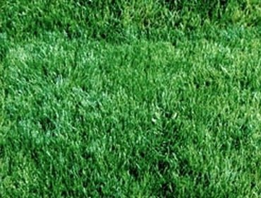 Erba prato grass lawn 22