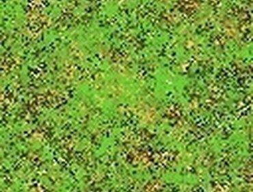 Erba prato grass lawn 220