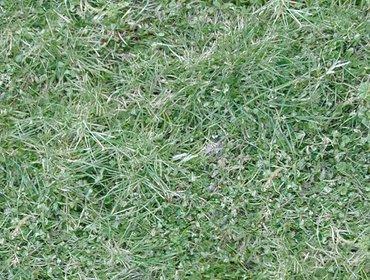 Erba prato grass lawn 225