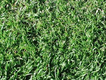 Erba prato grass lawn 226