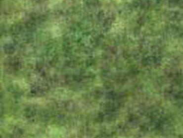 Erba prato grass lawn 227