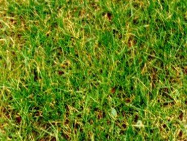 Erba prato grass lawn 23