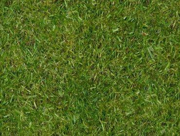 Erba prato grass lawn 232