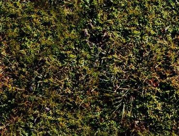 Erba prato grass lawn 243
