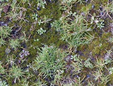 Erba prato grass lawn 246