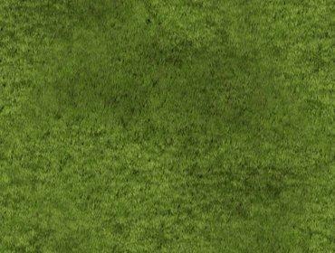 Erba prato grass lawn 252