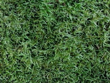 Erba prato grass lawn 256