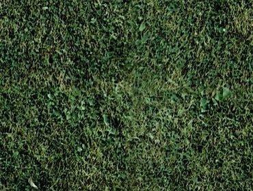 Erba prato grass lawn 257