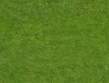 Erba prato grass lawn 258