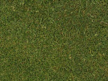 Erba prato grass lawn 26