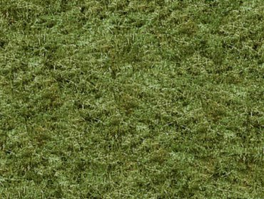 Erba prato grass lawn 260
