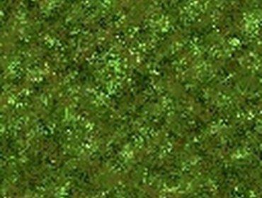 Erba prato grass lawn 261