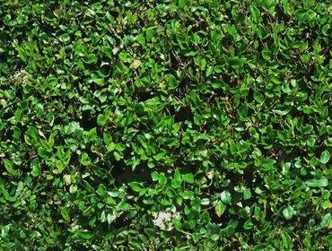 Erba prato grass lawn 263