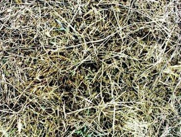 Erba prato grass lawn 265