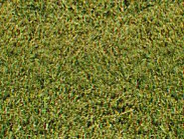 Erba prato grass lawn 267
