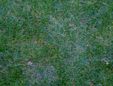 Erba prato grass lawn 268