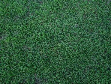 Erba prato grass lawn 27
