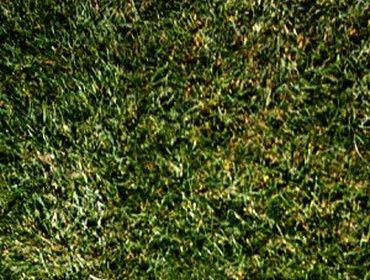 Erba prato grass lawn 270