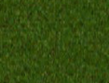 Erba prato grass lawn 271
