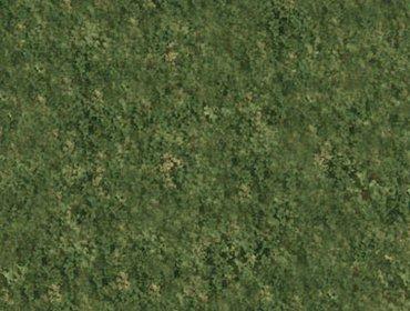 Erba prato grass lawn 272