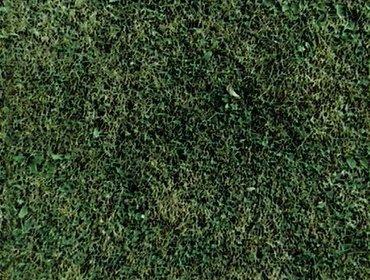 Erba prato grass lawn 273