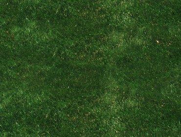 Erba prato grass lawn 275