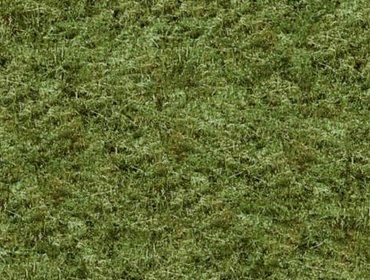 Erba prato grass lawn 276