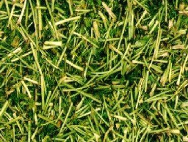 Erba prato grass lawn 29