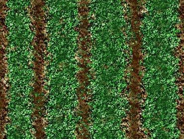 Erba prato grass lawn 33