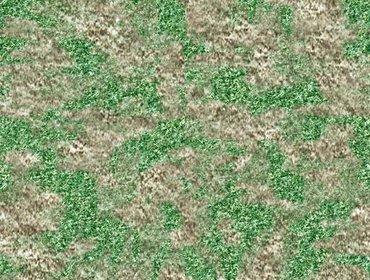 Erba prato grass lawn 37