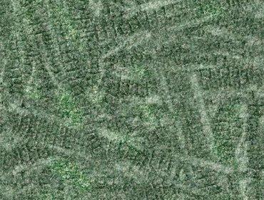 Erba prato grass lawn 40