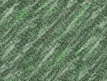 Erba prato grass lawn 41