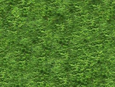 Erba prato grass lawn 42